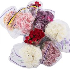 CARNATION ONLY ASSORTED
